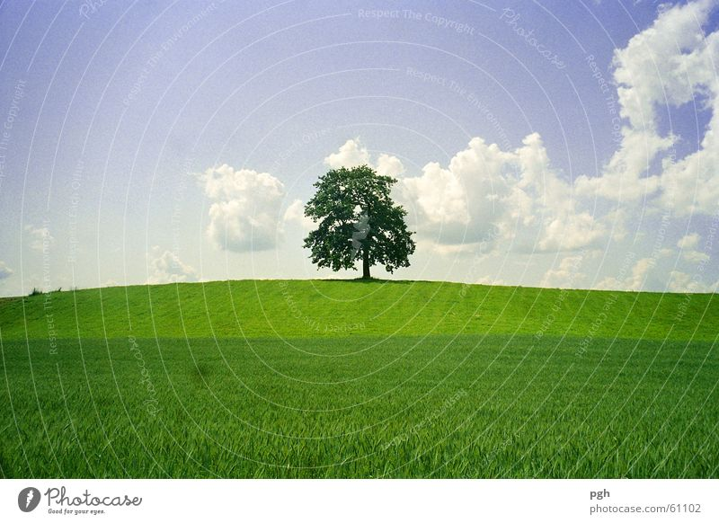 Alter wunderschöner Baum in Münsing Himmel grün Wolken Hügel