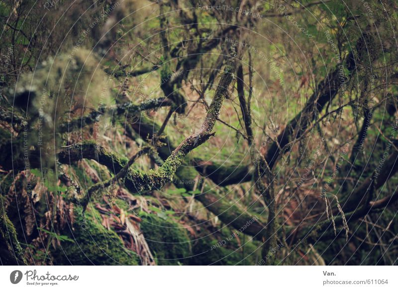 Schatz, hol schomma die Machete raus Natur Pflanze Baum Sträucher Moos Farn Ast Wald Wachstum grün Urwald eng Unterholz Farbfoto Gedeckte Farben Außenaufnahme