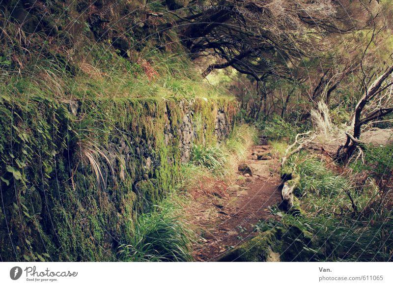 My Way Ferien & Urlaub & Reisen wandern Natur Pflanze Baum Gras Sträucher Moos Wald Mauer Wand Wege & Pfade braun grün bewachsen eng mystisch Farbfoto