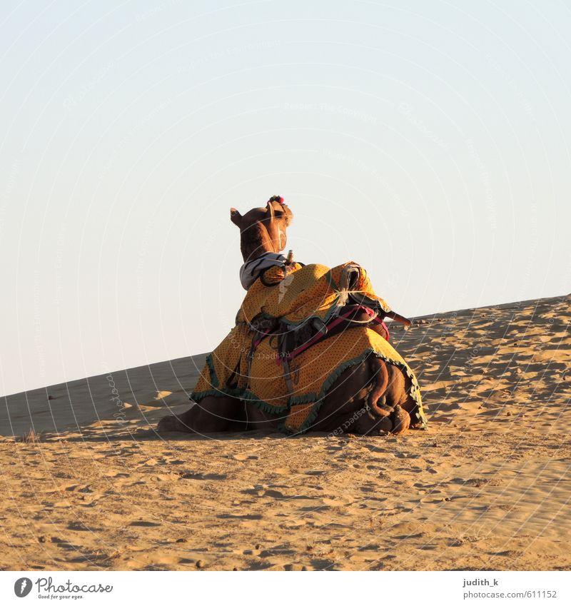 Feierabend... Reiten Ferien & Urlaub & Reisen Tourismus Ausflug Abenteuer Ferne Freiheit Safari Sommer Sonne Wüste Reitsport Erde Sand Sonnenaufgang