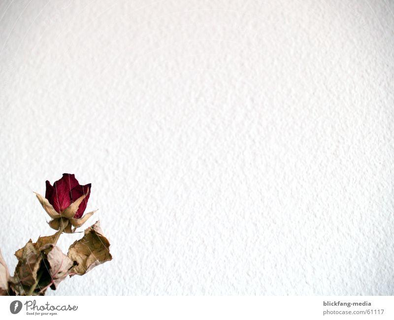 Briefpapier Rose rot trocken dunkel Wachstum Tod Schreibpapier Trauer getrocknet Traurigkeit