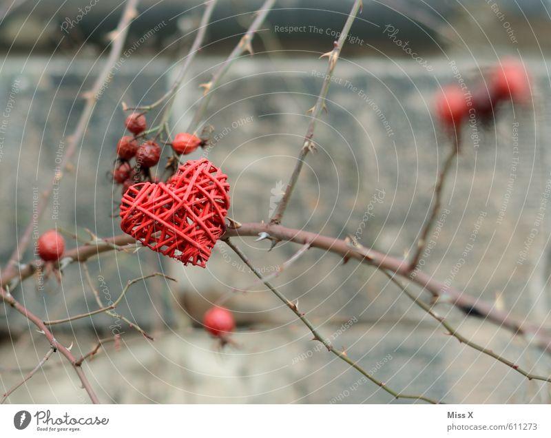 Dornenherz Dekoration & Verzierung Valentinstag Sträucher Rose stachelig Gefühle Stimmung Liebe Verliebtheit Romantik Liebeskummer Eifersucht Liebesaffäre Herz