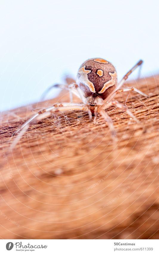 Exotische Spinne Tier Wildtier 1 Holz bedrohlich braun gelb Abenteuer Aggression Farbfoto Makroaufnahme Schwache Tiefenschärfe