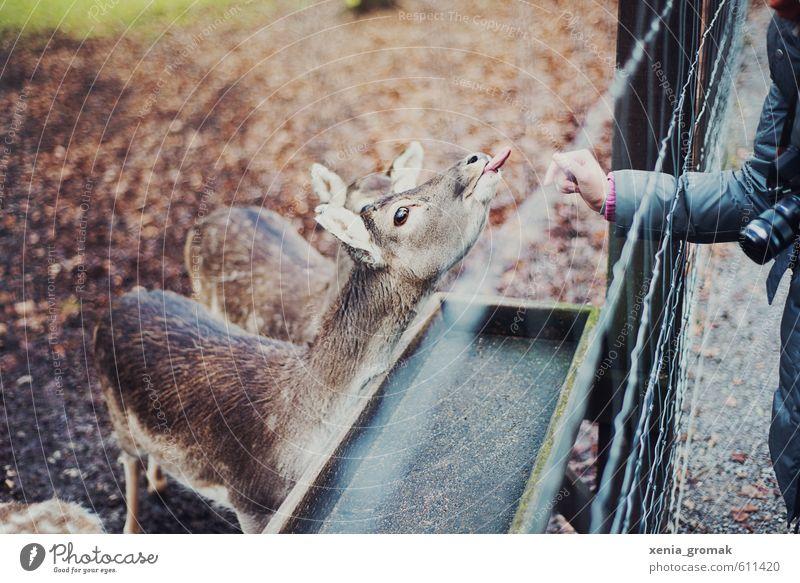 Tierpark Umwelt Tierjunges Park Freizeit & Hobby elegant Wildtier Ausflug genießen Tiergruppe Abenteuer Fell Tiergesicht Jagd Zoo exotisch