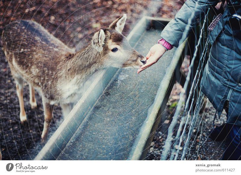 Fütterungszeit Freizeit & Hobby Spielen Ausflug Abenteuer Tier Wildtier Tiergesicht Zoo Streichelzoo 1 Tierjunges füttern ästhetisch wild Idylle Reh Gitter Zaun