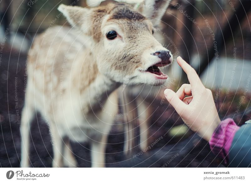Bambi Hand Freude Tier Wald Umwelt Wiese Park Freizeit & Hobby wild Wildtier frei Ausflug Abenteuer Freundlichkeit Tiergesicht Zoo