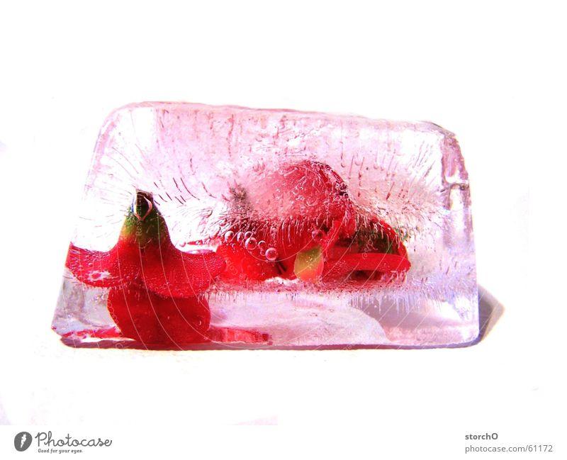 Gefangen im Eis Pflanze Eis Thüringen Gemeiner Stechdorn