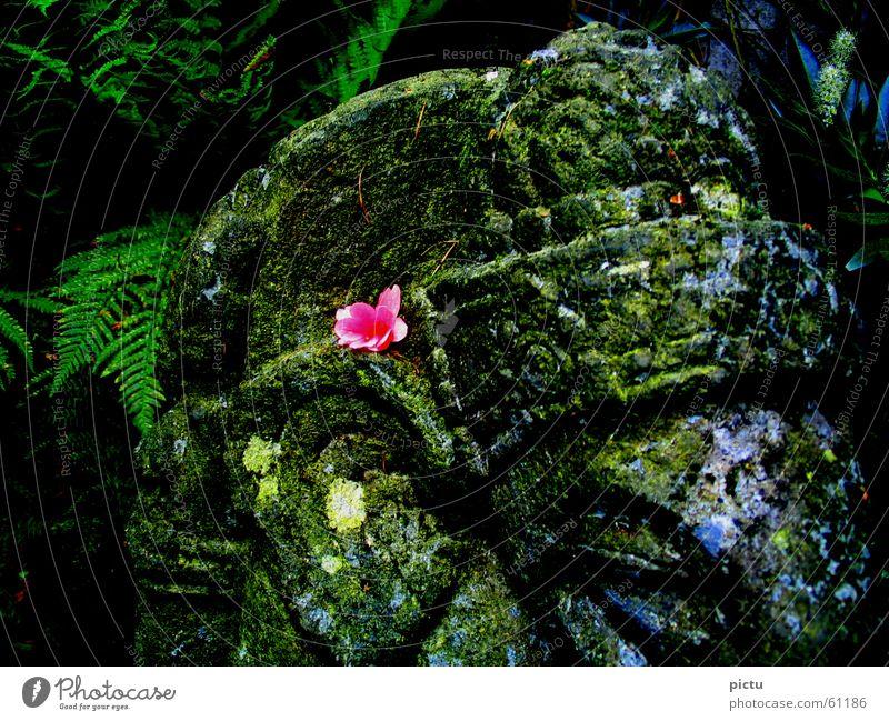 Ganescha ruhig Blüte Garten Denken Asien Urwald Indien mystisch