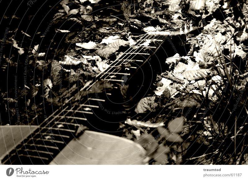 lost poem. Blatt Einsamkeit schwarz dunkel Holz Denken Gitarre Bauch verloren Hals Tränen Lied Saite Sepia poetisch Musik