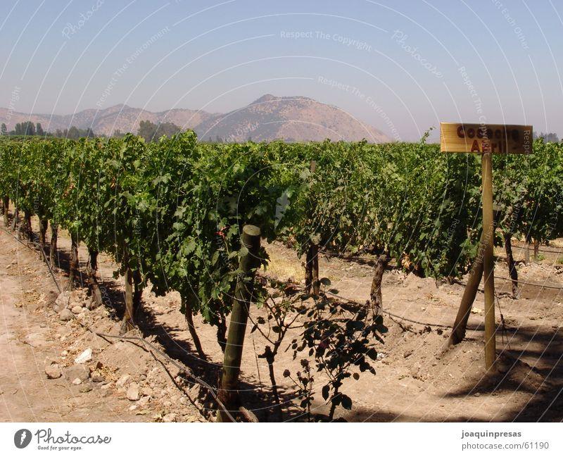 Chilean Wineyards Himmel Wein Chile
