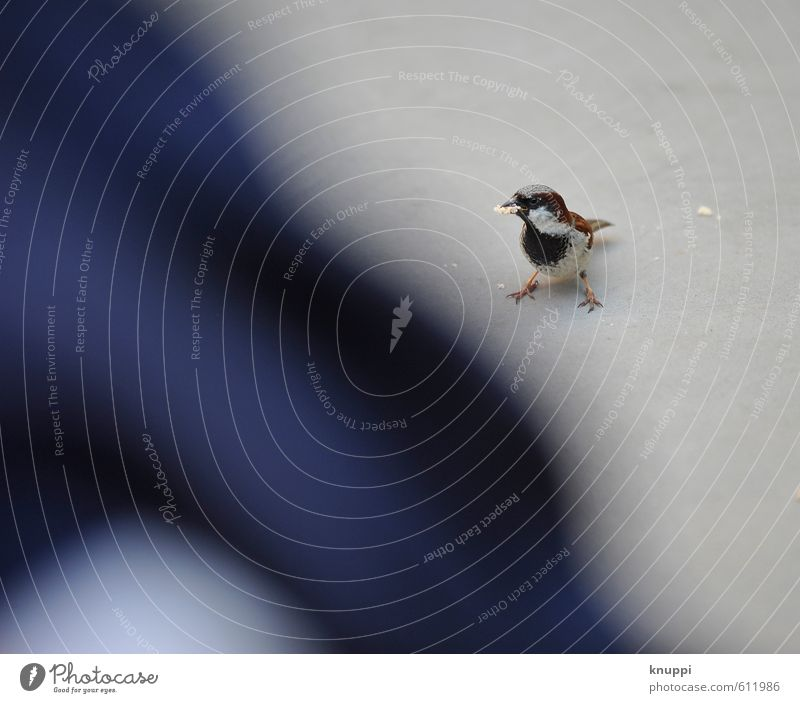 bodenständig | Fastfood Natur blau Sommer Freude Tier schwarz Bewegung grau Essen braun springen Vogel wild Wildtier stehen Fröhlichkeit