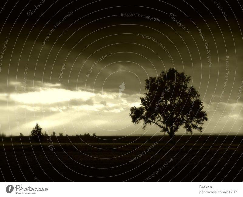 Darkness falls Baum dunkel Wolken Sträucher Blatt Licht Himmel Ast Lichtstrahl Traurigkeit