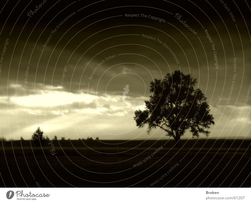 Darkness falls Himmel Baum Blatt Wolken dunkel Traurigkeit Sträucher Ast Lichtstrahl