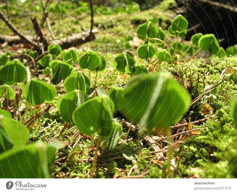 Aufregung Blume Blatt Euphorie grün Baum Sommer Frühling Bodenbelag planzen Erde Elektrizität Ast Zweig
