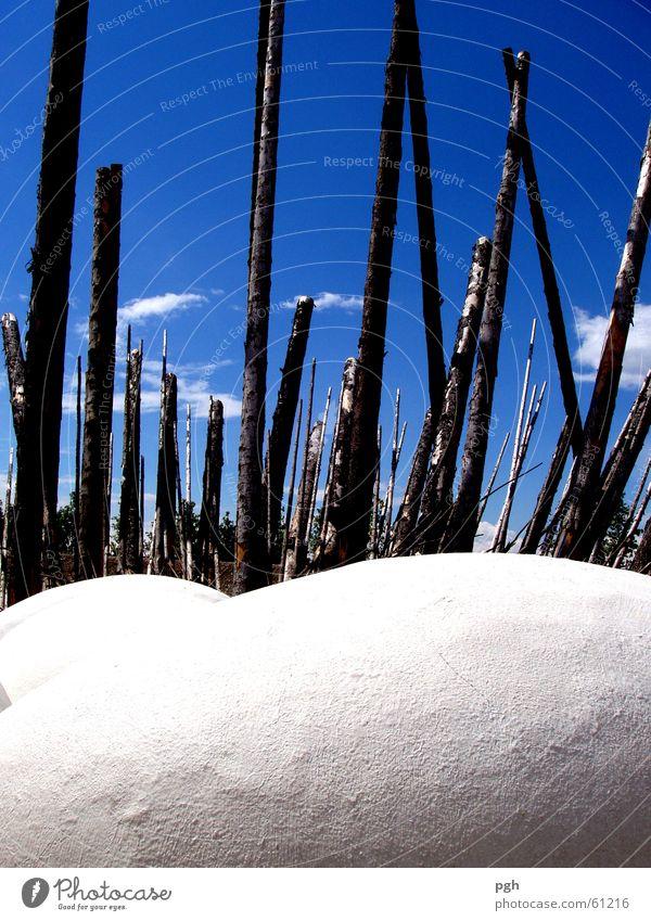 Vogelnest auf der Buga Himmel Holz Ei Nest Horst