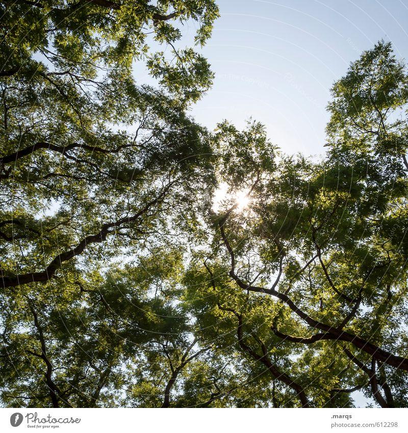 Licht Umwelt Natur Wolkenloser Himmel Sonne Sommer Schönes Wetter Baum Baumkrone Ast Laubbaum leuchten einfach hell schön Stimmung Frühlingsgefühle Erholung