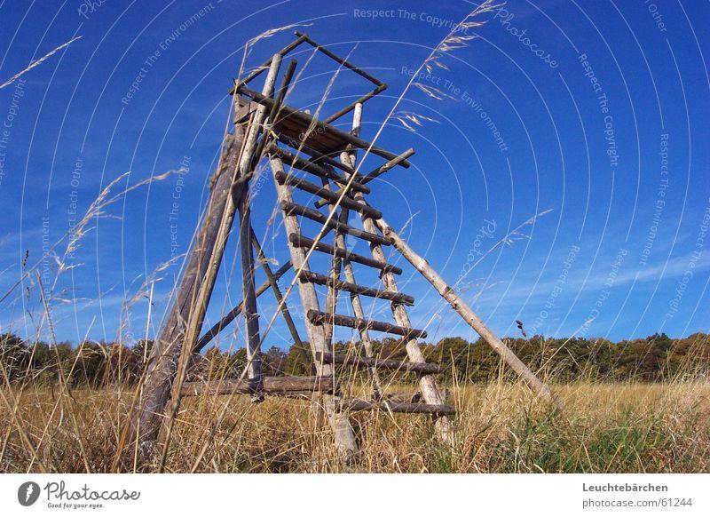 Zum Himmel Hinauf Himmel blau Wald Gras Getreide Jagd Jäger Waldrand