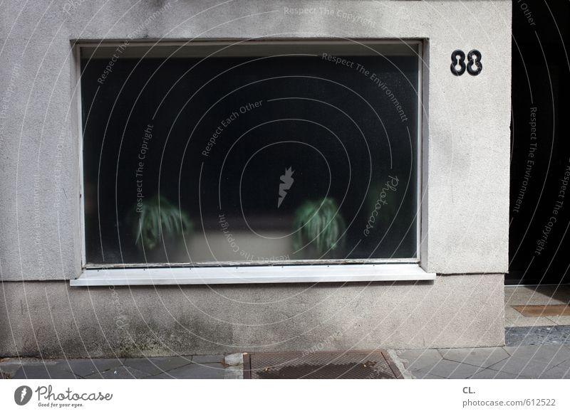 88 Stadt Pflanze Einsamkeit Haus Fenster Wand Straße Traurigkeit Mauer grau Häusliches Leben trist Vergänglichkeit Ziffern & Zahlen Fernweh Eingang