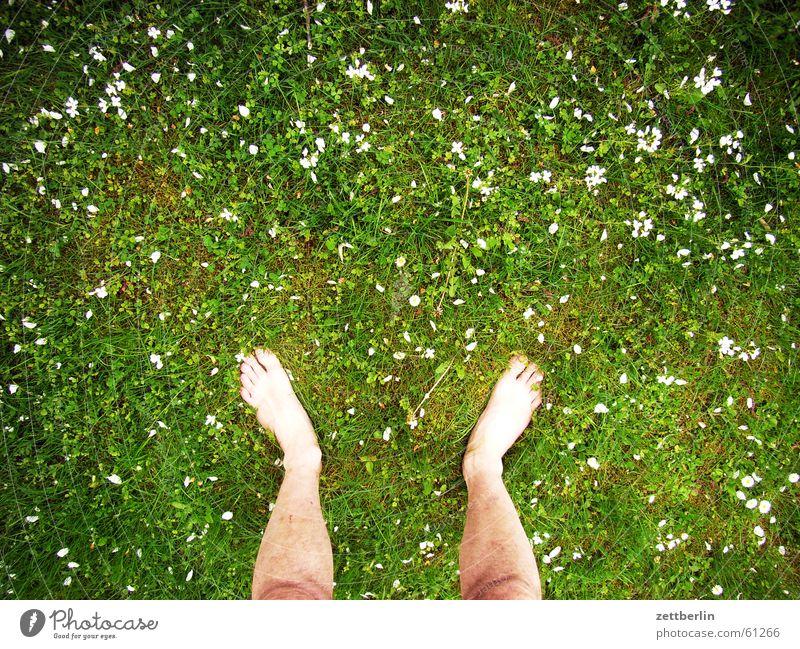 Auf der Wiese stehen Ferien & Urlaub & Reisen Blume Gras Freiheit Fuß frei Rasen Bauernhof Barfuß Zehen links rechts