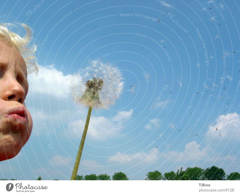 Puste Blume Kind Himmel Wolken Junge Löwenzahn blasen Blume