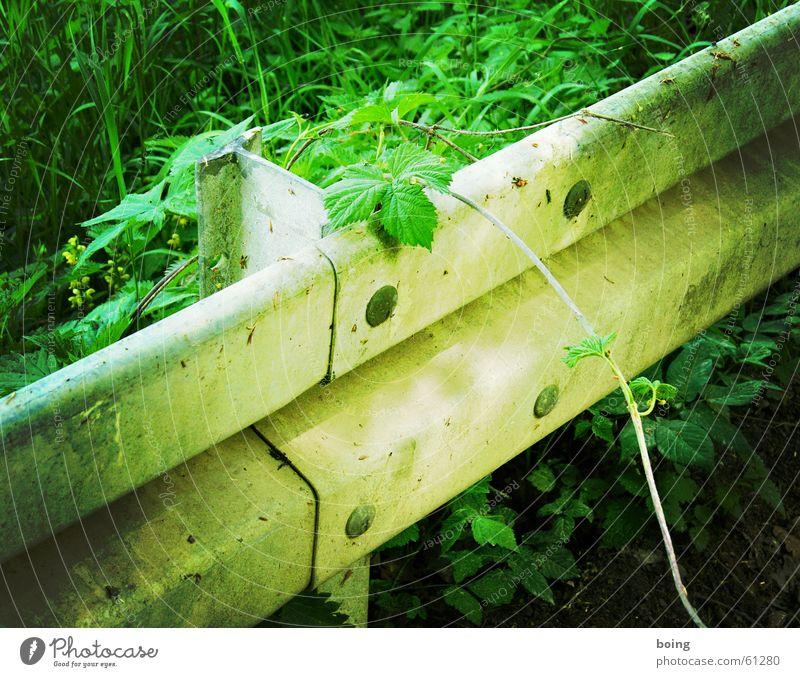 welcome to the jungle Straße Sträucher Sicherheit Vergänglichkeit Urwald Verkehrswege Hecke Leitplanke