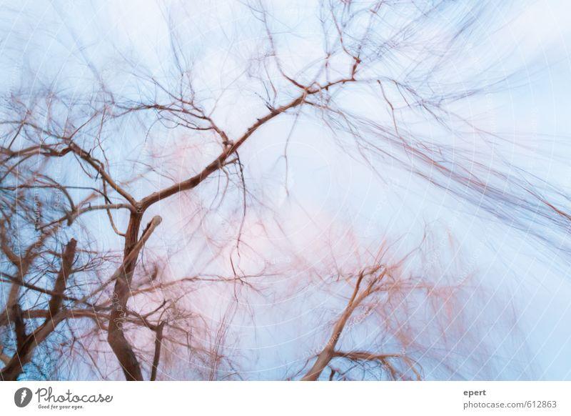 Thermodynamik Natur Urelemente Luft Wetter Unwetter Wind Sturm Pflanze Baum Haare & Frisuren Bewegung Farbfoto Außenaufnahme Bewegungsunschärfe