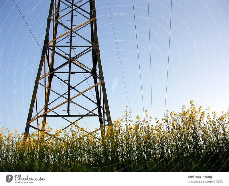 Raps unter Strom Himmel Kraft Feld Elektrizität Kabel Stahl Strommast Leitung Baugerüst Rapsfeld