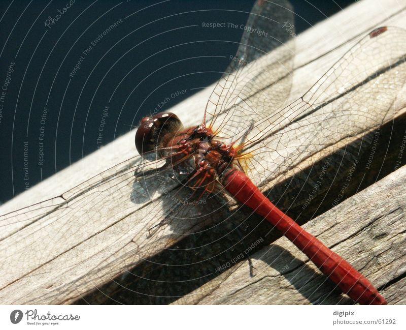 Flugobjekt Natur Sommer Holz Graffiti Luftverkehr Flügel Insekt Libelle