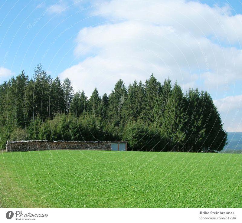 Black forest wood Farbfoto Außenaufnahme Menschenleer Textfreiraum unten Tag Zentralperspektive Sommer Landschaft Himmel Wolken Baum Gras Wiese Wald Holz grün