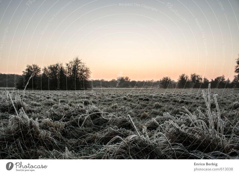 Morgendämmerung mit einem Hauch von Morgenreif Himmel Natur Pflanze Landschaft Freude Winter Umwelt Wiese Gefühle Gras Glück natürlich außergewöhnlich Stimmung