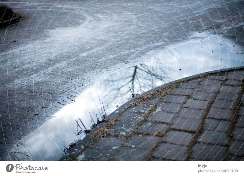 kalte Wege II Wasser Baum Einsamkeit Winter dunkel Straße Traurigkeit Gefühle Herbst Wege & Pfade grau Linie Stimmung trist Verkehr