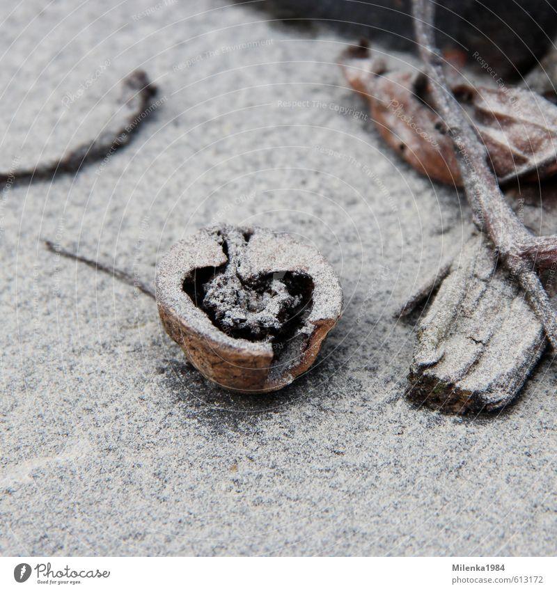 verstaubte Liebe Holz Umweltverschmutzung Nuss Walnuss Herz Winter Frost Staub kalt frieren Symbole & Metaphern Natur Farbfoto Gedeckte Farben Außenaufnahme