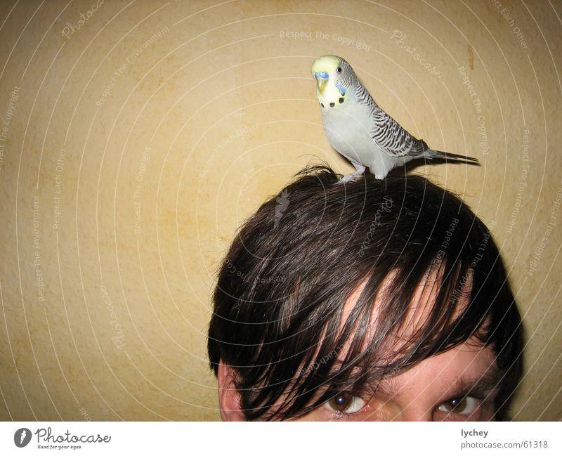 bubi aufm kopf Gesicht Auge Haare & Frisuren grau Denken braun Papageienvogel Vogel Fett Hälfte Haarsträhne durchdringend Wellensittich