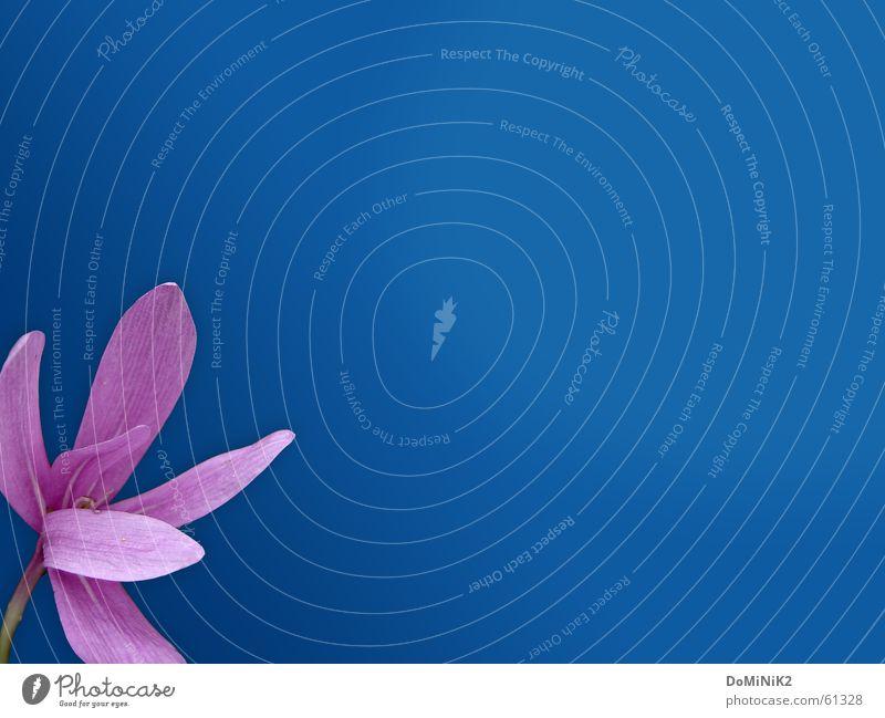 Schönheit der Natur blau schön Blume Farbe Blatt Erholung Wiese Herbst Frühling Blüte Garten Kraft wandern Ausflug violett