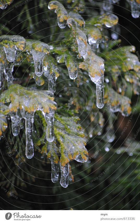 Eisregen Natur Wasser Wassertropfen Winter Klima Klimawandel schlechtes Wetter Regen Frost Schnee Pflanze Baum Sträucher frieren glänzend kalt Eiszapfen