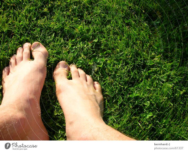 dem sommer auf der spur Sommer Wiese Gras grün Rasen Fuß foot feet Garten