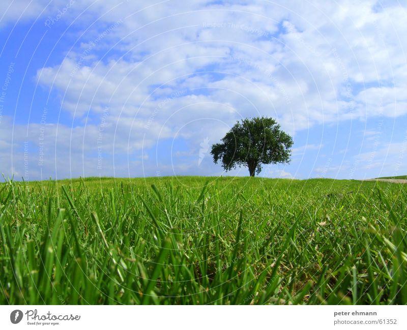 Blaugrüne Gedanken Gras saftig satt Reifezeit Sträucher Feld Halm Stauden sprießen Sommer Frühling Landwirtschaft Teppich springen Wolken Umweltschutz ruhig