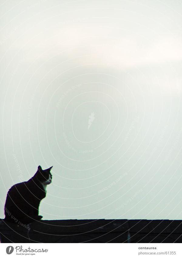Miese Katze auf dem Dach Katze Suche Aussicht Dach beobachten Hauskatze