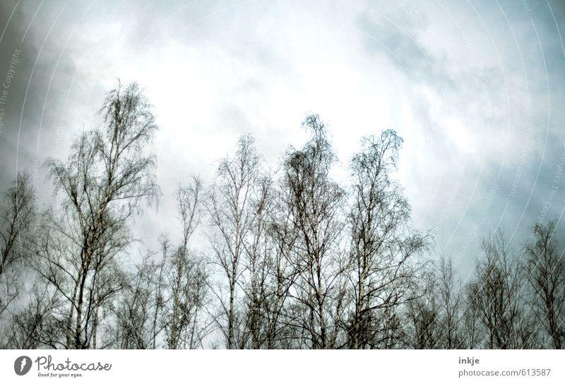 Der Winter wird kommen. Düster, klamm und kalt. Himmel Natur Baum Wolken Winter dunkel Wald kalt Umwelt Leben Herbst Stimmung Luft Eis Angst Nebel