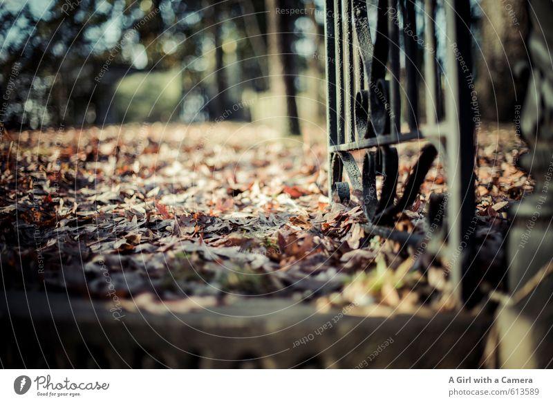 on finding peace Natur alt ruhig Blatt Umwelt Herbst natürlich Bodenbelag Eingang vergangen Waldboden spukhaft Eisentor