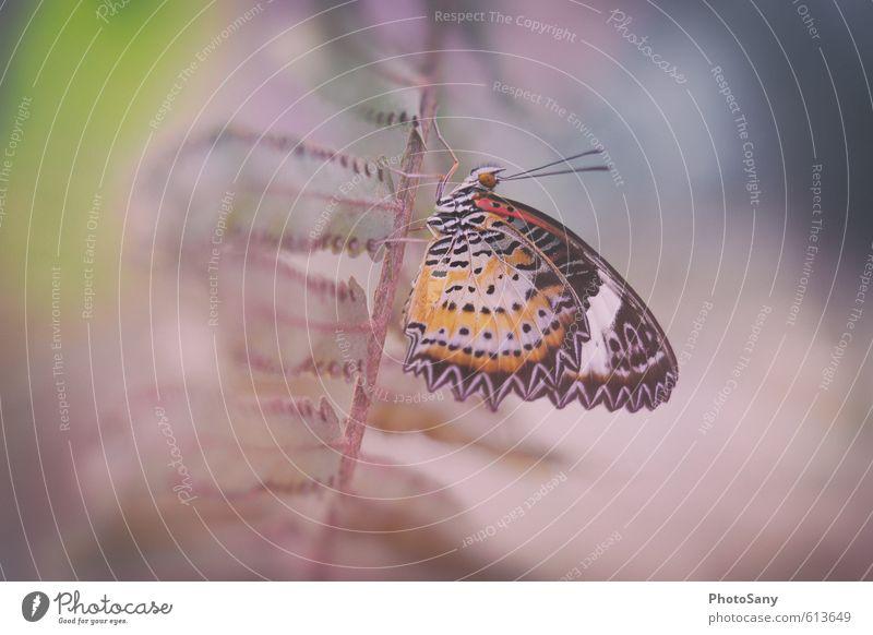 Schmetterling II Natur Pflanze Grünpflanze Tier Wildtier Zoo 1 authentisch schön gelb grün violett rot schwarz weiß Farbe ruhig stagnierend paplliorama Farn