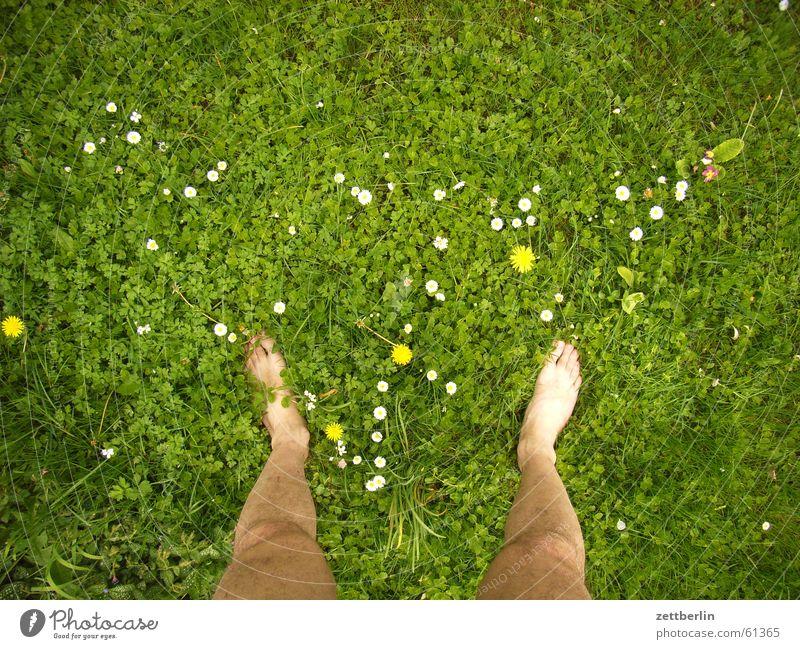 Auf der Wiese, andere Stelle Gras Blume rechts links stehen Barfuß nackt Ferien & Urlaub & Reisen Bauernhof Rasen Fuß beide frei Freiheit seele baumeln