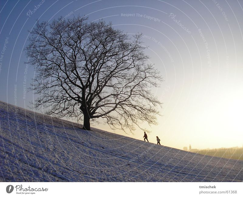 I´ll be there! Winter Olympiapark München Himmel tree baume couple snow Schnee sun Sonne munich sky himme