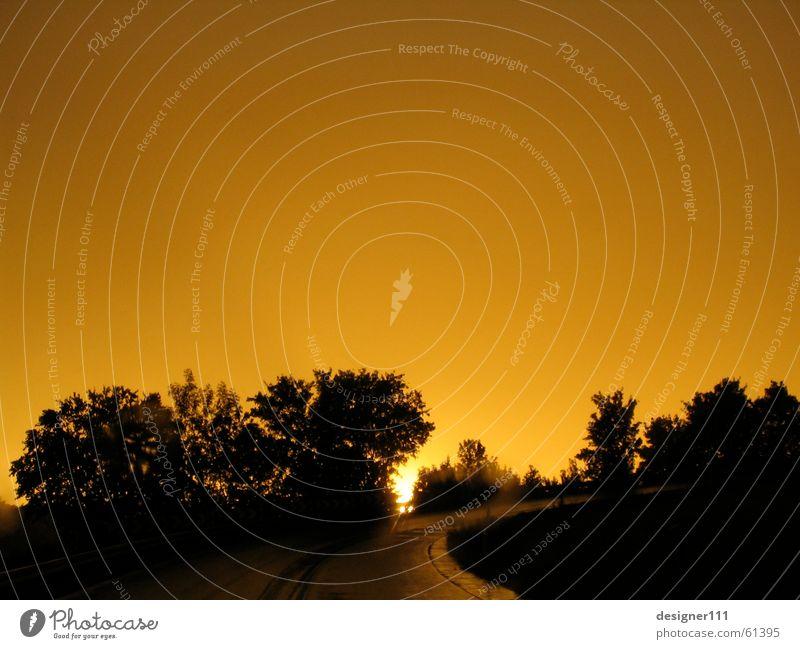 road to sunset Ferien & Urlaub & Reisen schön Baum rot Sonne schwarz gelb Straße Gefühle Traurigkeit Denken träumen Stimmung Regen Wetter gold