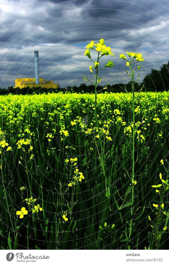 Der Schein trügt Blume grün Sommer Wolken gelb Blüte Industriefotografie Fabrik