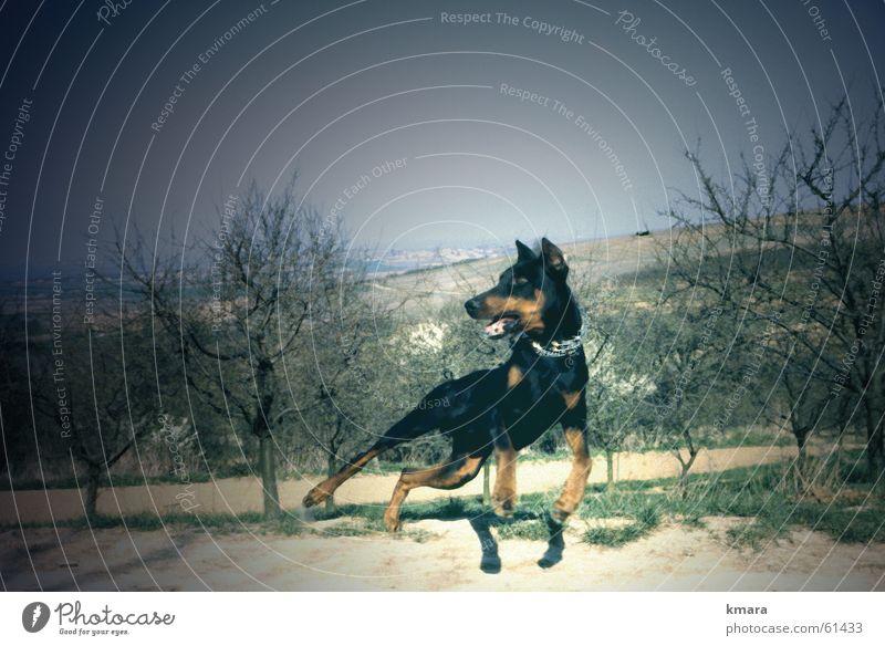 Toby Hund Energiewirtschaft sportlich Momentaufnahme