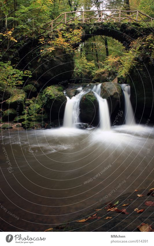 Im Fluss Natur Pflanze grün Wasser Sommer Wald Berge u. Gebirge Leben Felsen Park Idylle Sträucher fantastisch Brücke Urelemente Flüssigkeit