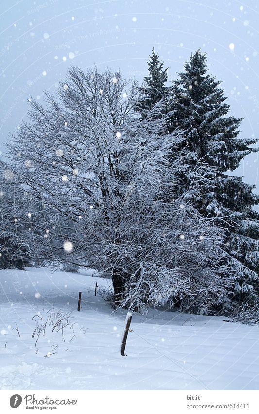 Schneeflöckchen Natur Ferien & Urlaub & Reisen Pflanze blau Baum Erholung Landschaft ruhig Winter Berge u. Gebirge Umwelt Feste & Feiern Schneefall träumen Eis