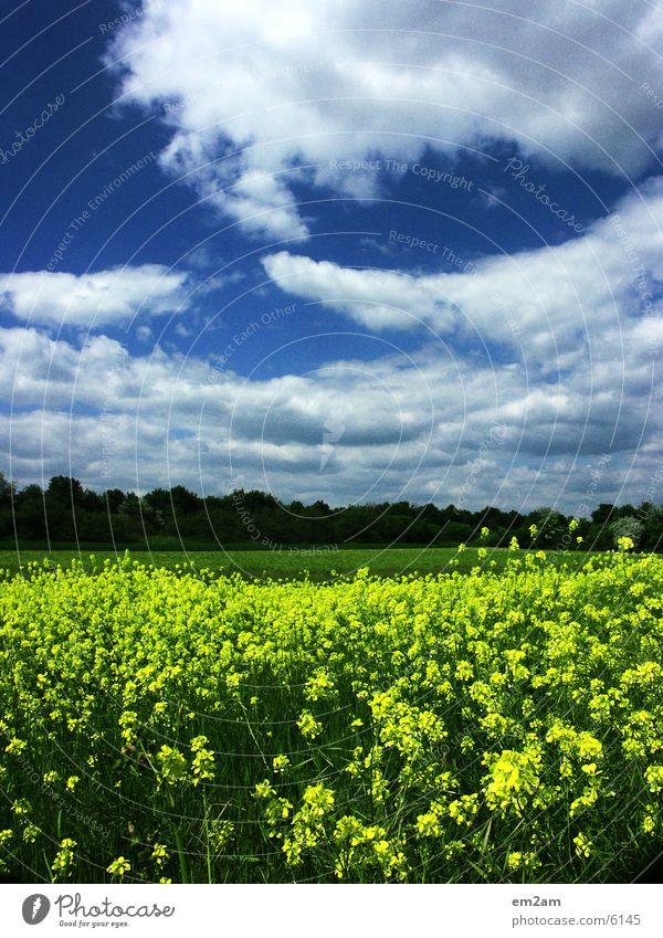 GELB gelb Wolken Blume Wald Kontrast