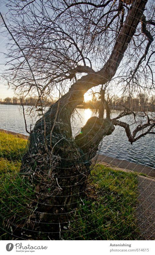 doppelter Baum Himmel Natur blau schön grün Wasser Pflanze Sonne Landschaft schwarz gelb Umwelt Wärme Gras Wetter